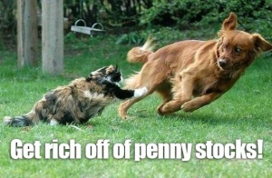 Am I Mad Cat and Dog Buy Penny Stocks copy